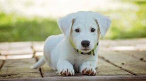 cbd olie voor honden