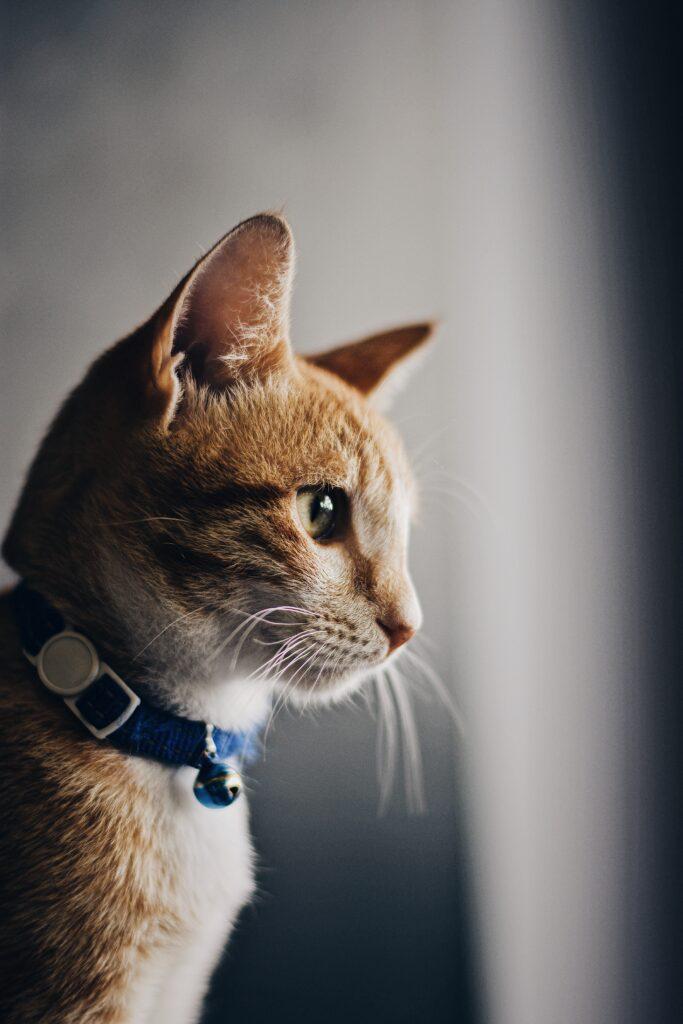 cbd katten