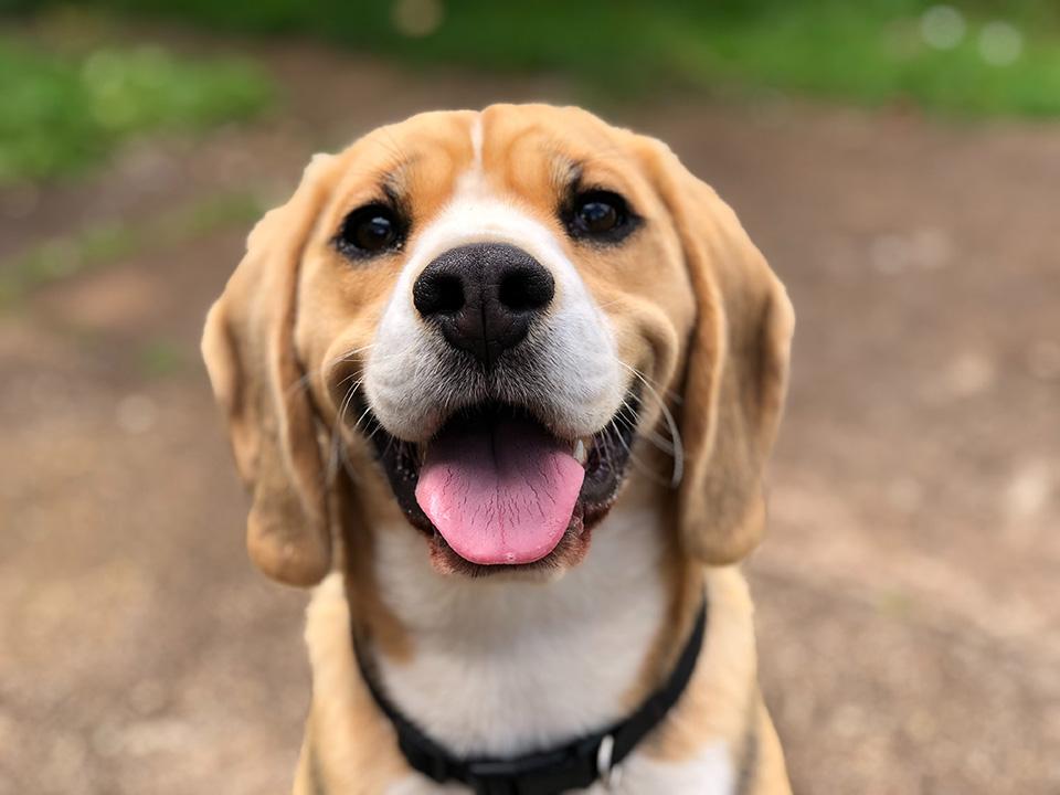 is your pet happy