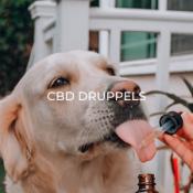 cbd druppels